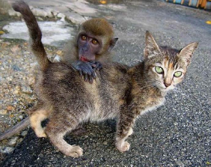 Ein kleiner Affe versteckt sich hinter einer kleinen Katze. Dabei legt er seine Hände auf den Rücken der Katze. Beide schauen dabei in die Kamera.