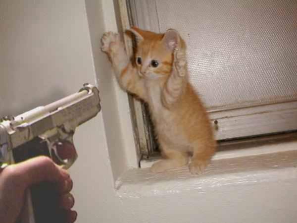 Eine Katze wird mit einer Pistole bedroht, es ist offensichtlich eine Fotomontage. Die Katze hebt die Pfoten in die Höhe und scheint sich zu ergeben.