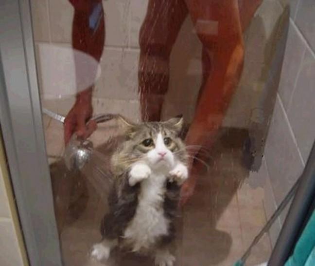 Eine Katze steht zusammen mit einem Mann in  der Dusche. Sie steht auf den Hinterpfoten an die Glastür gelehnt und schaut sehr traurig hinaus. Währenddessen wird sie von dem Mann mit der Brause abgeduscht.