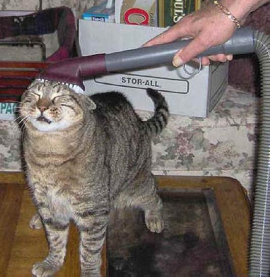 Eine Katze wird mit einem Staubsauger gereinigt. Der Staubsauger ist an ihrem Kopf und sie schaut etwas verdutzt drein.