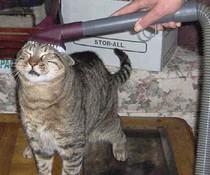 Gesaugte Katze