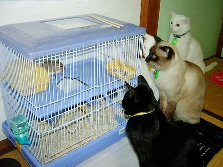 Fünf Katzen sitzen um einen Käfig herum. In dem Käfig sitzt ein Hamster. Die Katzen würden ihn sich sicher gern schnappen, allerdings kommen sie wegen der Gitterstäbe nicht an den Hamster heran.