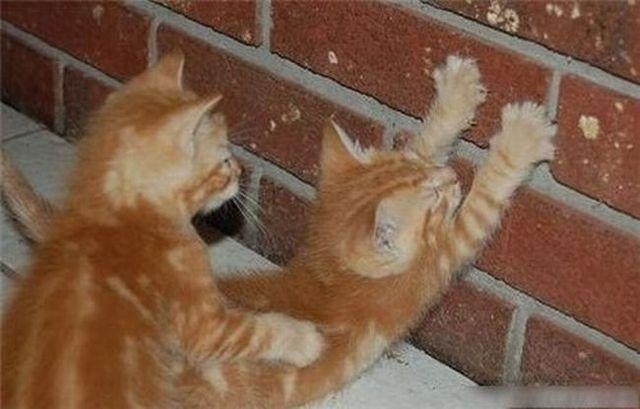Zwei Katzen scheinen sich zu lieben.