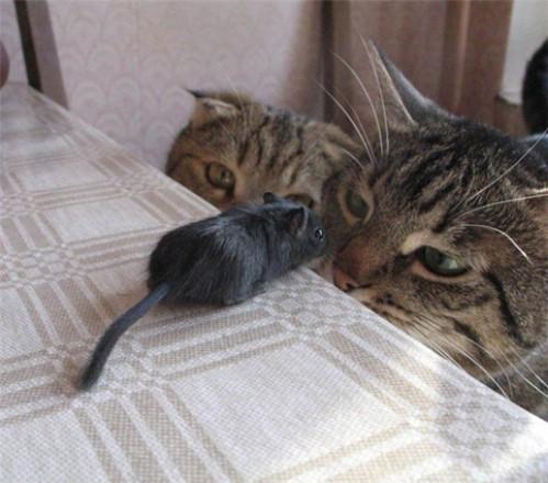 mäuse video für katzen