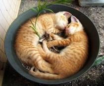 Doppelschlaf