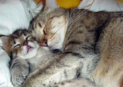Zwei Katzen schlafen aneinandergekuschelt. Es sieht sehr gemütlich aus.