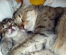 Kuscheln und schlafen