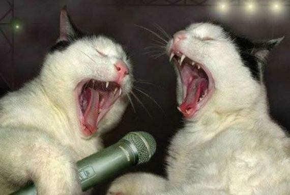 Zwei Katzen scheinen in ein Mikrofon zu schreien.