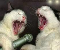 Katzen-Karaoke