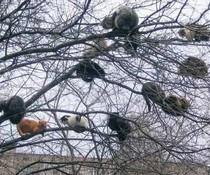 Baum-Katzen
