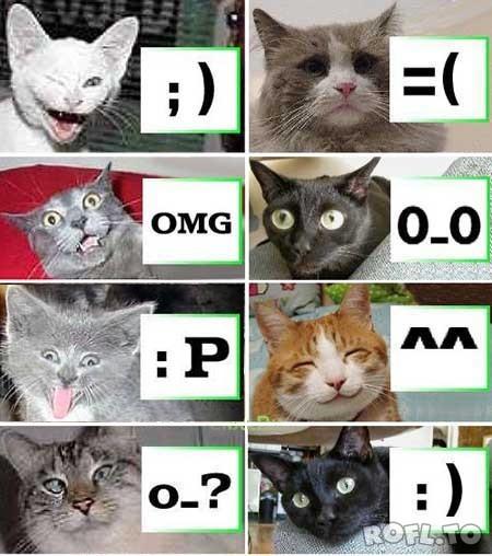Acht Katzen sind in einer Grafik jeweils neben einem Smiley dargestellt, dass dem Gesichtsausdruck der Katze entspricht.
