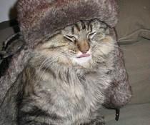Russische Katze