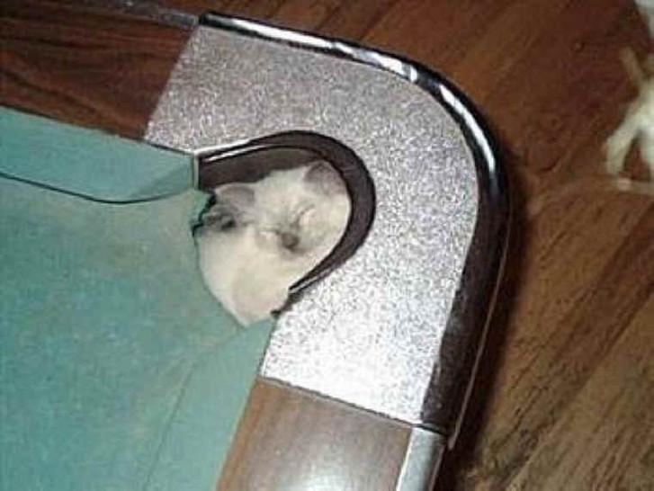 Eine kleine Katze hat es sich in einem Loch in der Ecke eines Billardtisches gemütlich gemacht. Sie scheint dort ganz gemütlich zu schlafen.