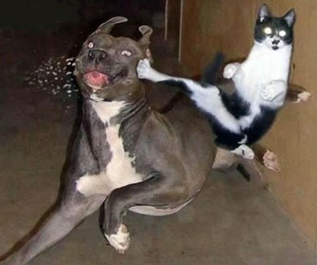 Eine Katze scheint einem Hund mit einem gezielten Tritt in die Schnauze zu treten. Die Katze scheint Kung-Fu oder Karate zu beherrschen.