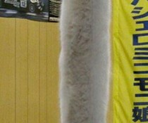 Lange Katze