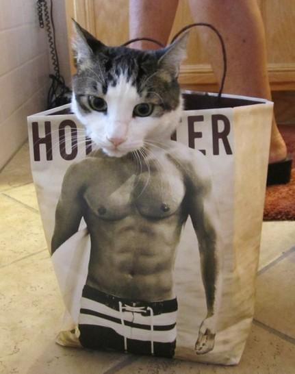 Eine Katze schaut aus einer Tüte, die mit einem muskulösen Mann bedruckt ist. Es sieht aus, als hätte die Katze einen muskelbepackten Männerkörper.