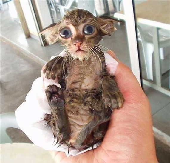Eine kleine Katze hat ein nasses Fell. Sie liegt in einer Hand und schaut mit großen Augen in die Kamera.