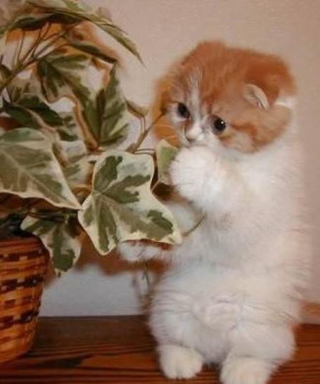 Eine kleine Katze steht auf den Hinterbeinen hinter einer Zimmerpflanze. Sie sieht sehr süß aus.