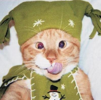 Eine Katze hat verrückte Kleidung an. Sie trägt eine Mütze und einen Schal. Dazu schleckt sie mit der Lippe über ihr Gesicht und schielt. Die Katze sieht extrem lustig aus.