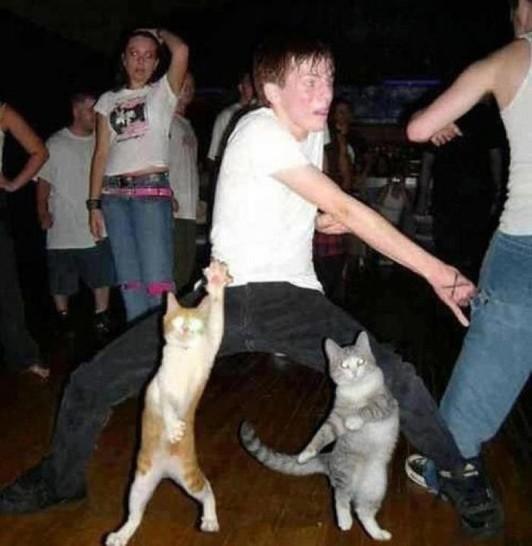 Ein jungen Mann tanzt, er sieht schon lustig und verrückt aus. Vor ihm tanzen noch zwei Katzen auf ähnliche Art und Weise. Insgesamt ein sehr bizarres Bild.