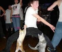 Tanz mit Katzen