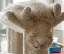 Yoga-Katze