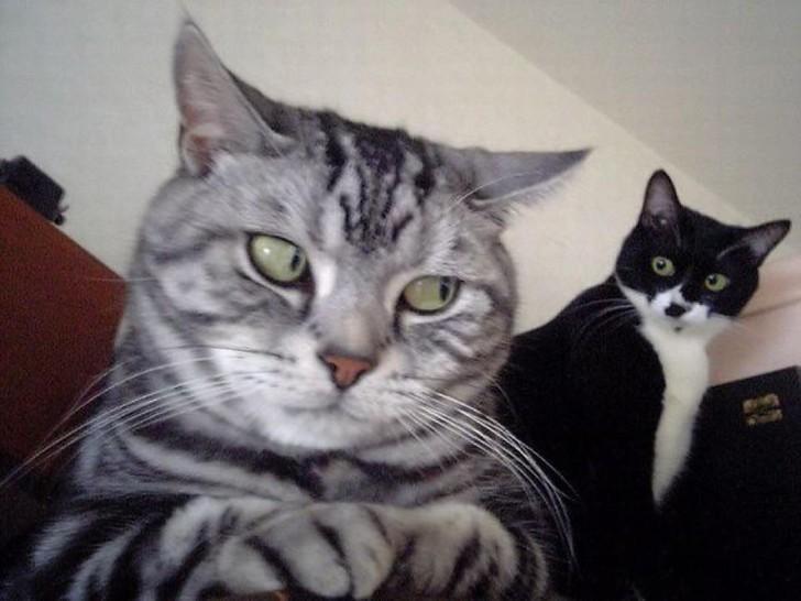 Zwei Katzen schauen sich aus den Augenwinkeln an.