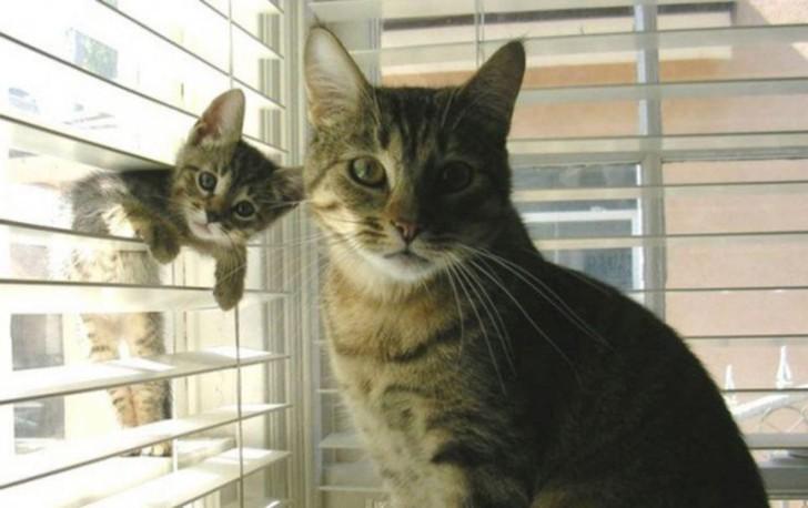 Zwei Katzen, eine scheint die Mama zu sein, eine das Katzenbaby. Die Katzen-Mama sitzt an einem Fenster, die kleine Katze hängt in einem Fensterrollo.