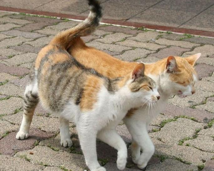 Zwei Katzen laufen nebeneinander her. Dabei schmusen sich die beiden aneinander und scheinen diesen Spaziergang im Sonnenschein sehr zu genießen.